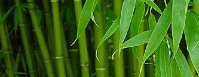 Коллекция Бамбук Органик| FLAUM HOME ORGANIC